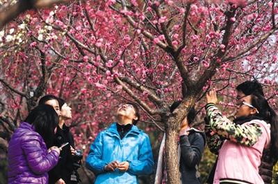 4520,周末踏青赏梅花(原创) - 春风化雨 - 春风化雨的博客
