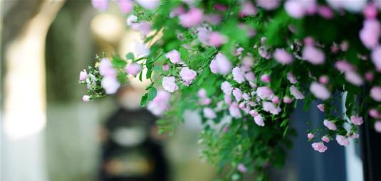 南京街頭薔薇香