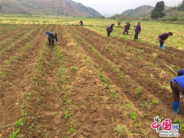 中国网10月24日讯在村里的养蚕基地,有20多个平方的蚕棚是属于我家的!平时,我们就在桑园和蚕棚务工,收入很稳定!桑蚕产业很好,让我们对增收脱贫更加有了盼头!    在独山县基长镇林盘村,很多贫困群众说起村里的桑蚕产业,个个充满了信心。    林盘村是省级深度贫困村,在县六园六场产业布局和基长镇产业发展引导下,村里积极调整和优化农业产业结构,走出了一条带动面广、群众参与度高、扶贫效益好的种桑养蚕产业发展之路。村里占地30亩的养蚕基地,目前已建成了30个蚕棚,其中70%是利用广州对口帮扶资