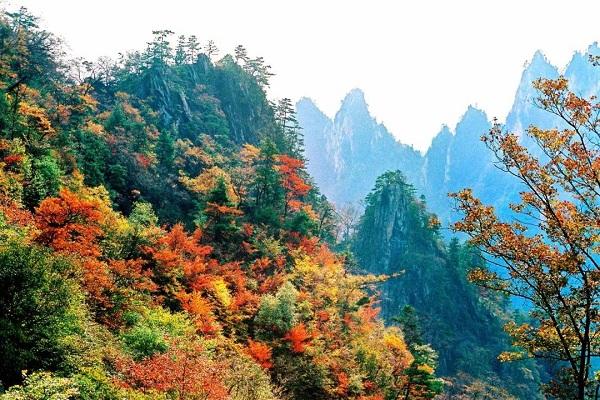 据西峡县旅游局消息,11月3日上午,秋景浓郁的西峡吸引了来自西安