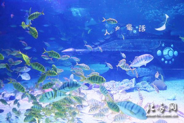 纯净·天津海昌极地海洋公园