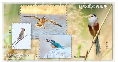 途经北京的鸟类(北京市野生动物救护中心工作人员史洋供图)