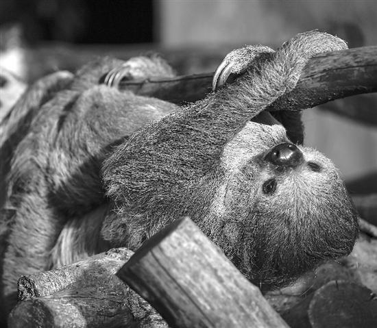 鲁鲁射人和动物_看来,大家都和记者一样,对夜幕下的动物世界充满好奇.