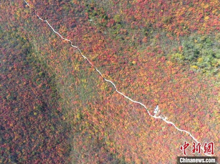 10月30日,晴好的天气,青天河风景区满山红叶美如画卷,吸引众多游人